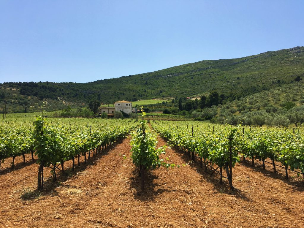 Palivou Estate Vineyard Nemea Greece   Greece2Taste Winery Tour