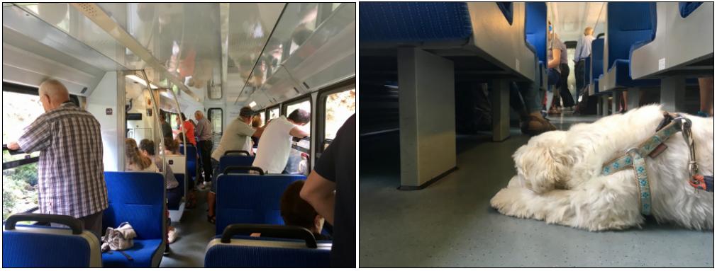 Odontotos Train Wagon