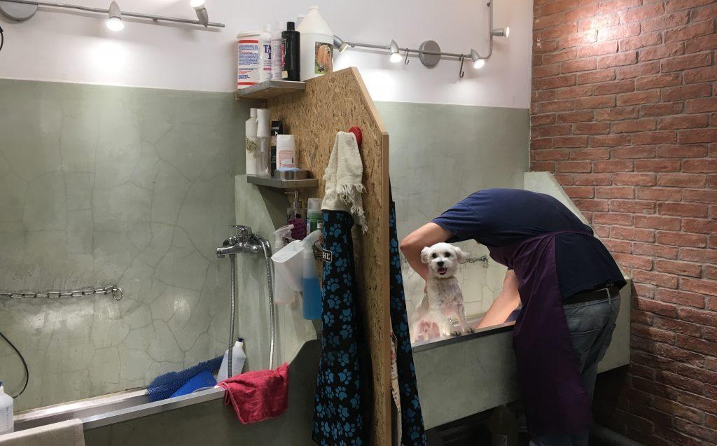Underdog Self Pet Wash Athens