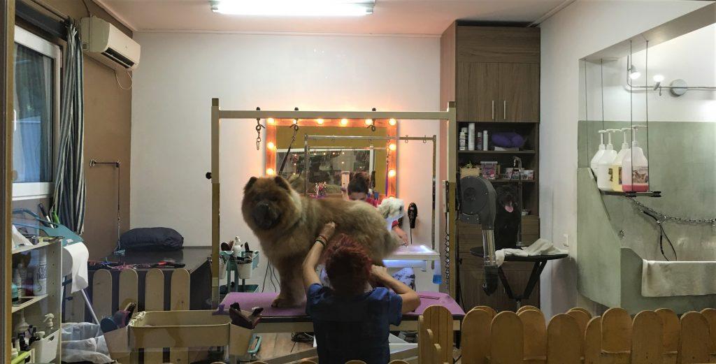Underdog grooming Glyfada